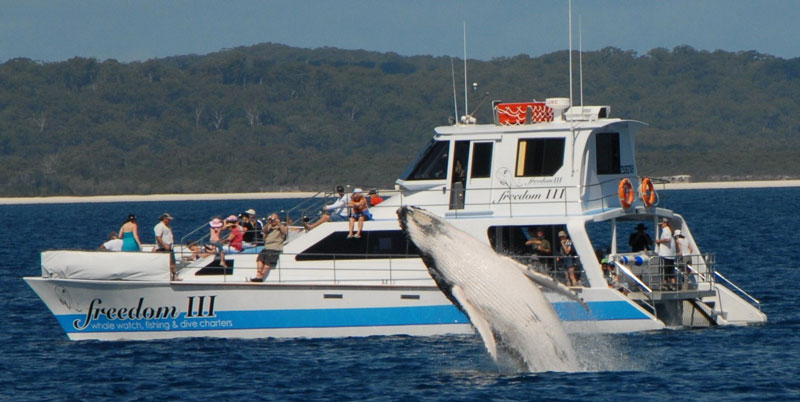 software for whale watching tours